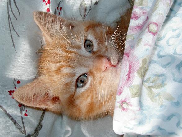 OLE TEADLIK! Kaheksa fakti sinu voodi kohta, mida sa varem kindlasti ei teadnud
