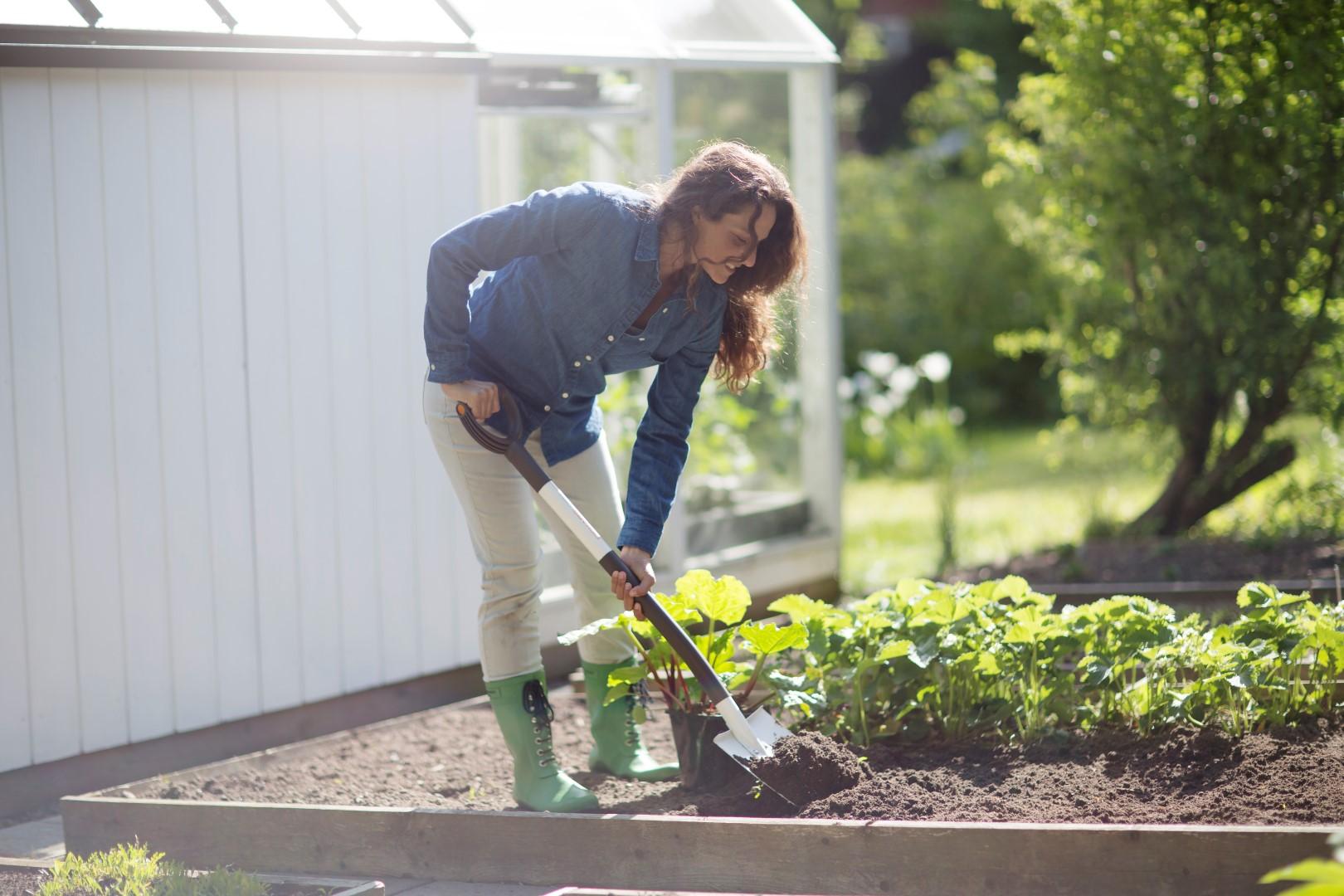 OLE TEADLIK! Õigete taimede koos kasvatamine tagab saagirikkuse