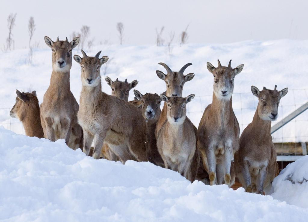 KINGIIDEE! Tallinna Loomaaia kinkekaart lubab aasta otsa loomadel külas käia
