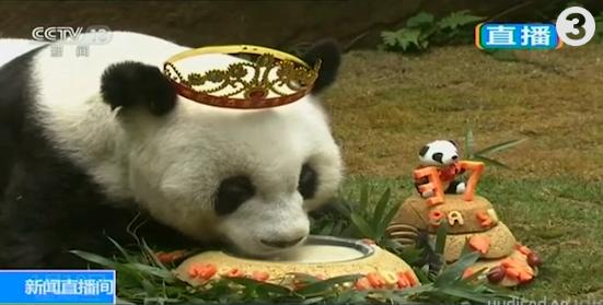 Imearmas! Maailma vanim pandaproua sai täna 37-aastaseks