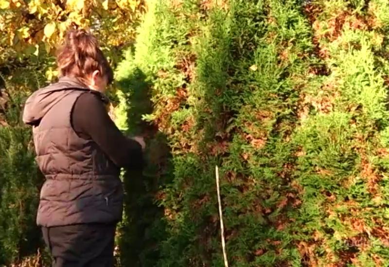 VIDEO! Lihtsad nipid, kuidas koduaed talveks ette valmistada
