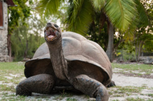 Salapärane saar Aldabra