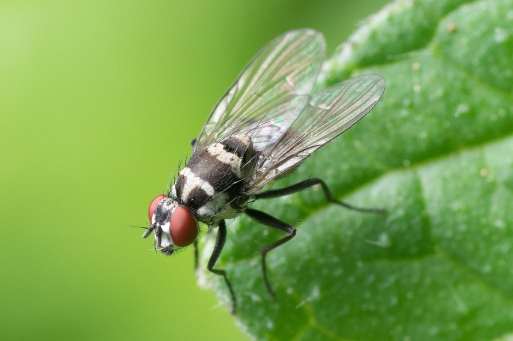 Kuidas hoida tüütud putukad eemal?