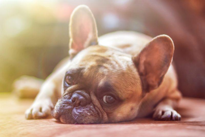 VIDEO! Lemmikute lemmik: kui kiiresti õpivad erinevad lemmikloomad?