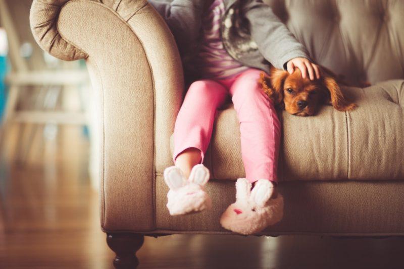 VIDEO! Lemmikute lemmik: milline on elu kaasaegses koertehotellis?