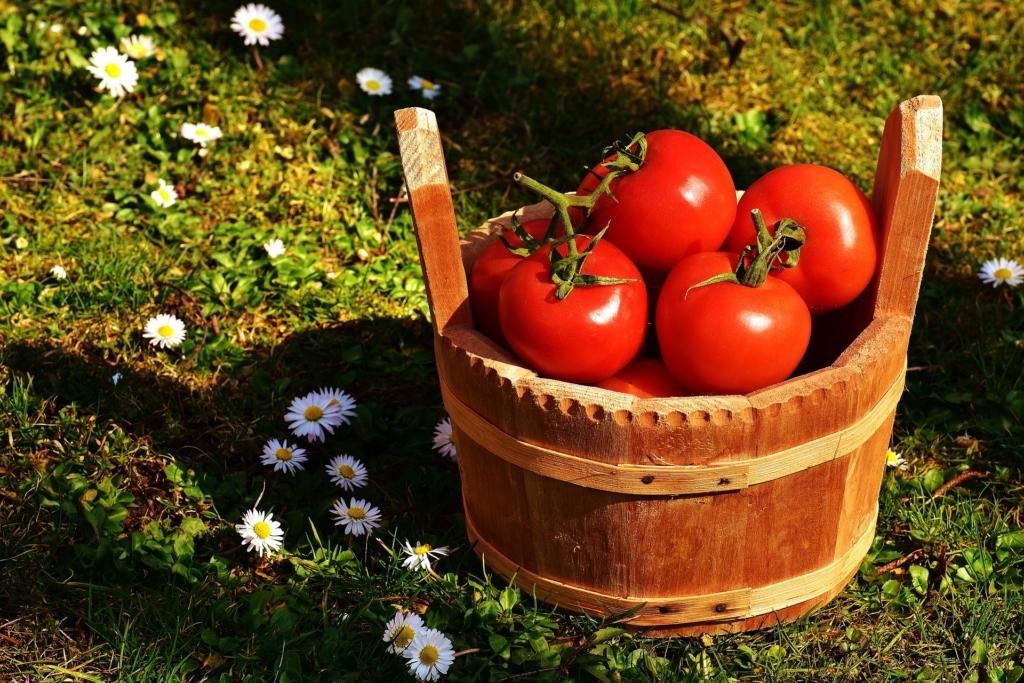 Nipid tomatisaagi suurendamiseks