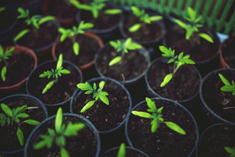 Miks eelistada polükarbonaadist kasvuhoonet?