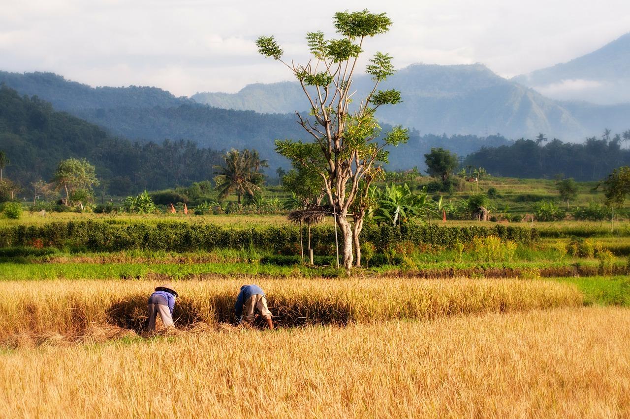 VIDEO! Seitsmesed Balil: kohalikud on eestlaste eeskujul asunud paradiisisaarel oma ümbrust koristama