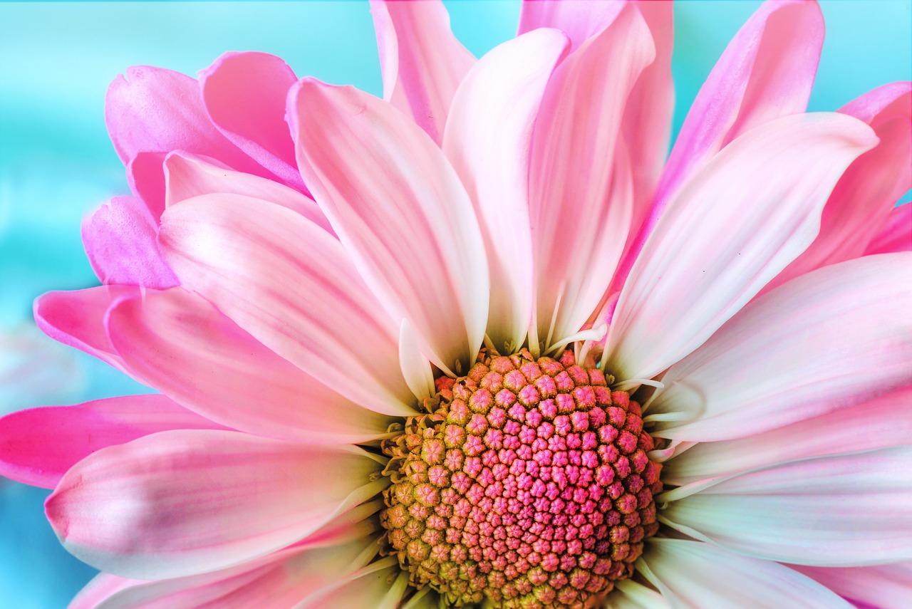 lill.Pixabay