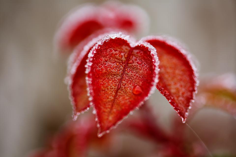 süda-lillepisar-loodus-pixabay