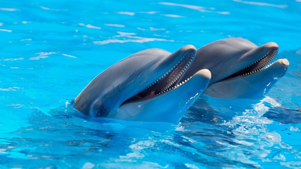 delfiinid.Pixabay