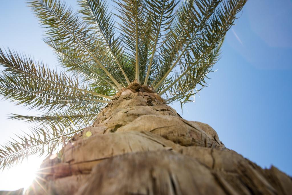 Palm.Pixabay