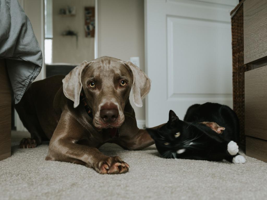 4 nõuannet lemmikloomaomanikule sobiva üürikodu leidmiseks
