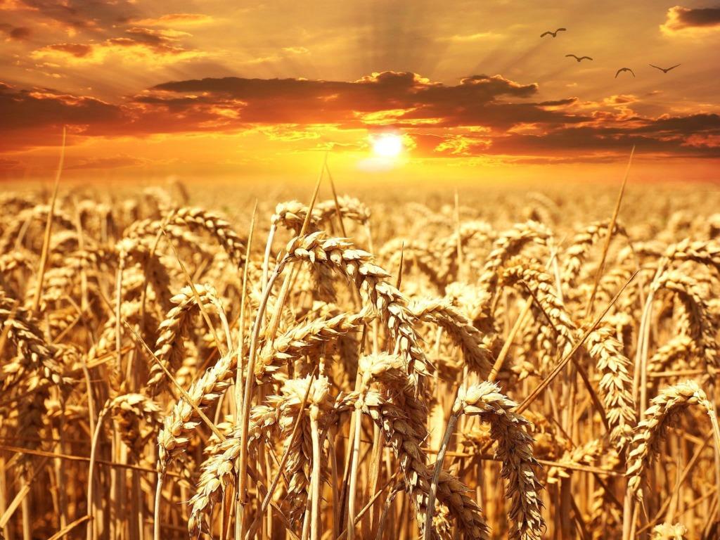 VIDEO I Ilusamad kevadilmad tähendavad põllumeestele kibekiiret tööperioodi