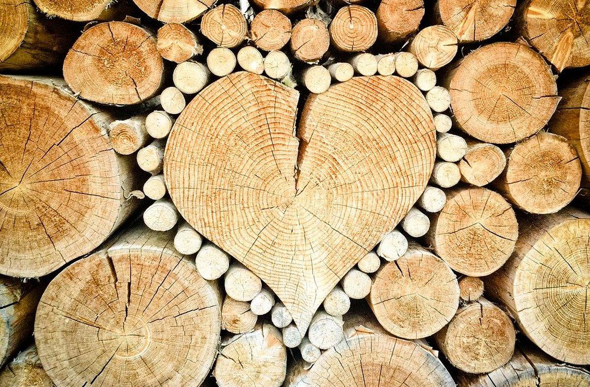süda-puud
